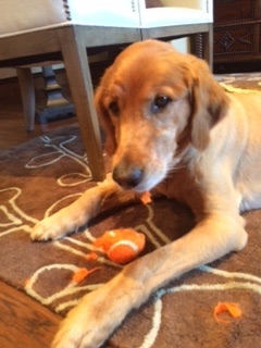 I have no idea who ate the orange ball, but I am vowing to never rest until we find out who did it!